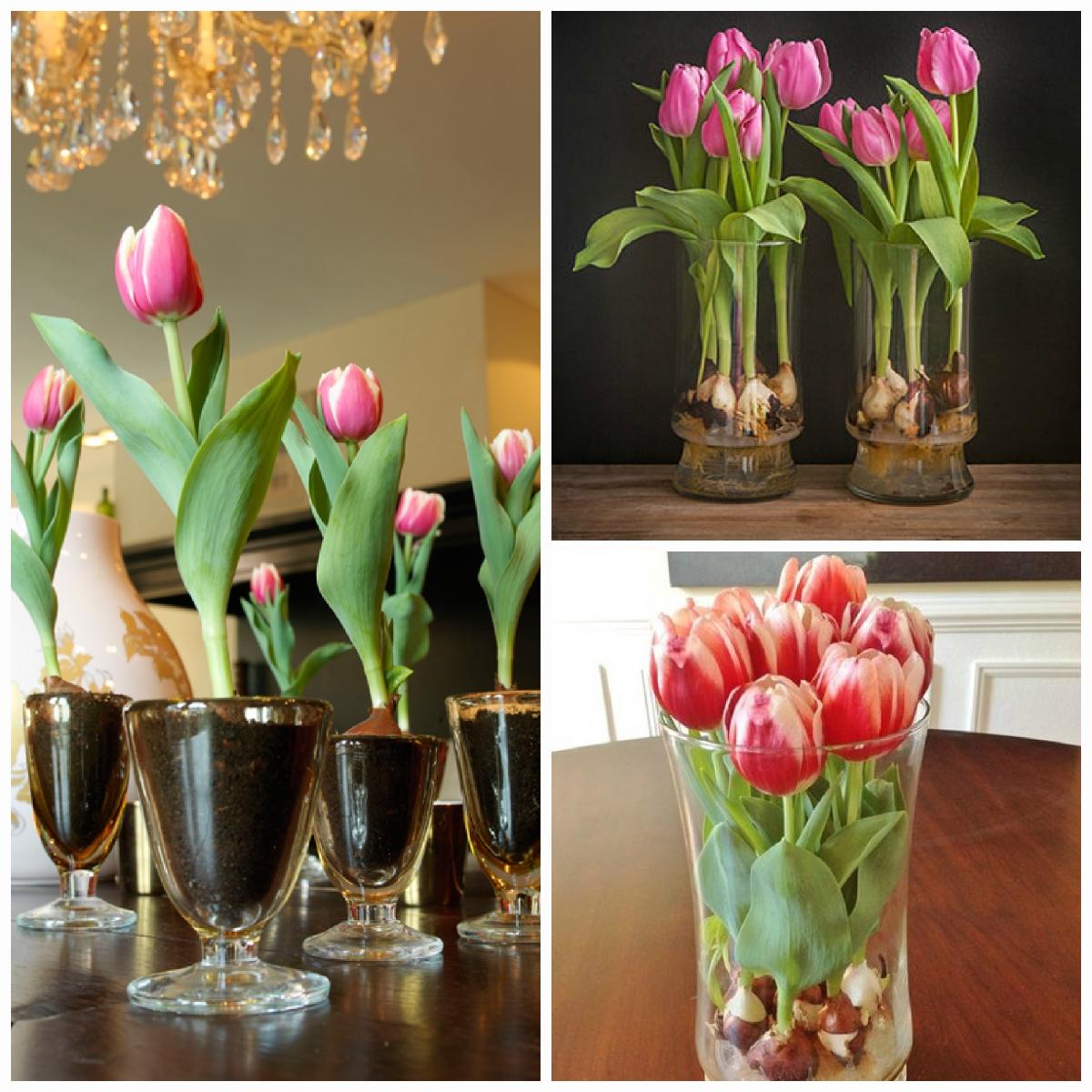 Как вырастить тюльпаны из семян в домашних условиях? 83