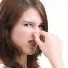 Как справиться с неприятным запахом от домашнего животного