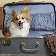 С кем оставить собаку на время отпуска?