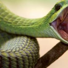 К чему снится, что укусила змея